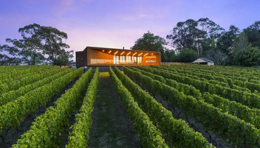 A Home Amongst the Vines