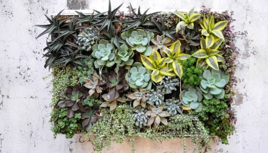 STARRING: SUCCULENTS
