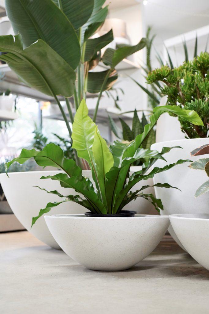 Plants Sydney