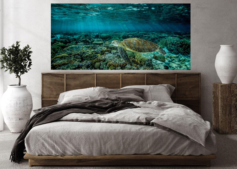 underwater photography 1