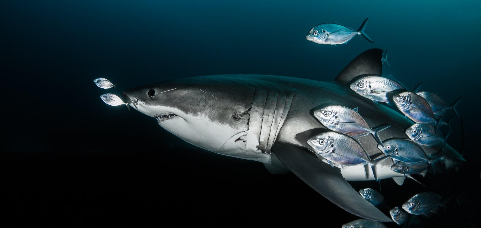 underwater photography 2